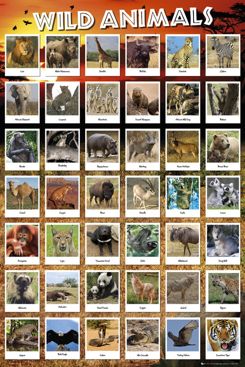 Poster Tiere 128794