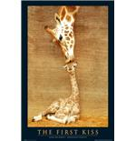 Poster First Kiss